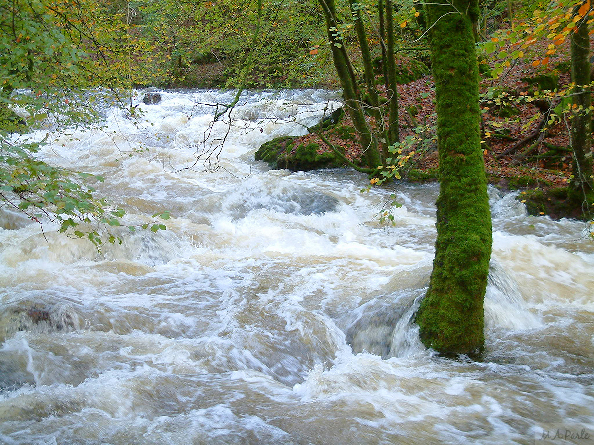 River Meavy in flood