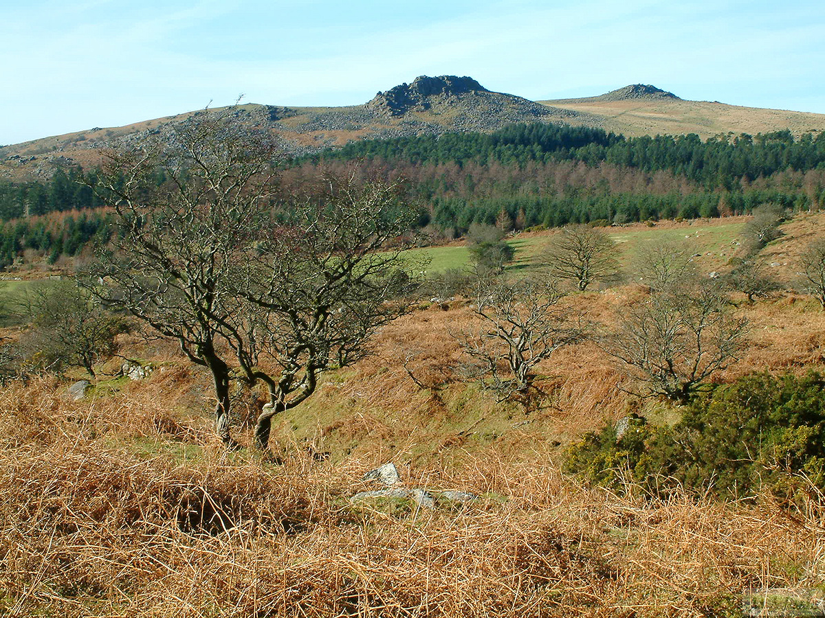 Looking across to Leather Tor from lower slopes of Down Tor